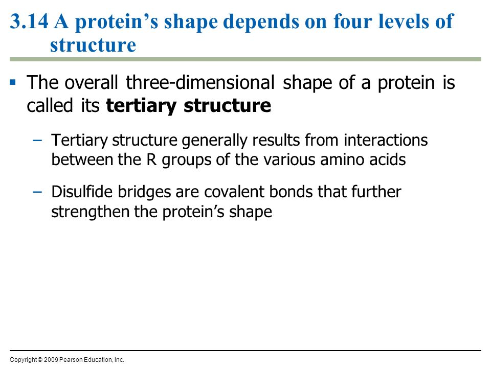 3.14 A proteins shape depends on four levels of structure The overall three-dimensional shape of a protein is called its tertiary structure –Tertiary