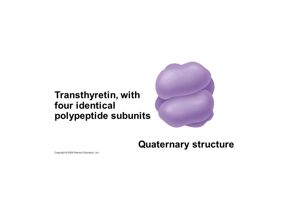Transthyretin, with four identical polypeptide subunits Quaternary structure