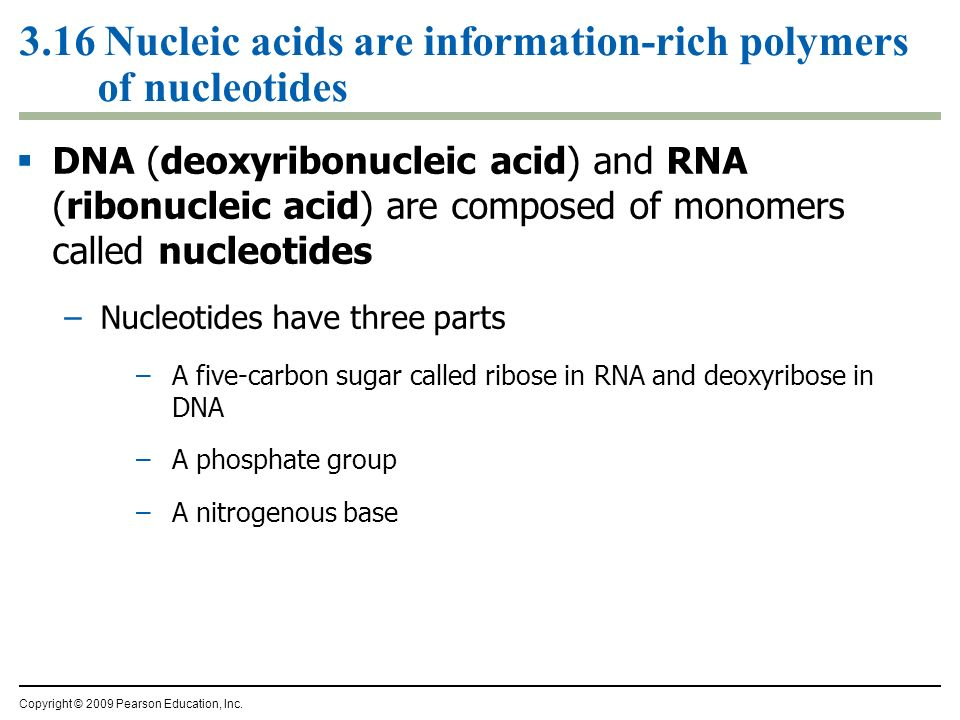 3.16 Nucleic acids are information-rich polymers of nucleotides DNA (deoxyribonucleic acid) and RNA (ribonucleic acid) are composed of monomers called