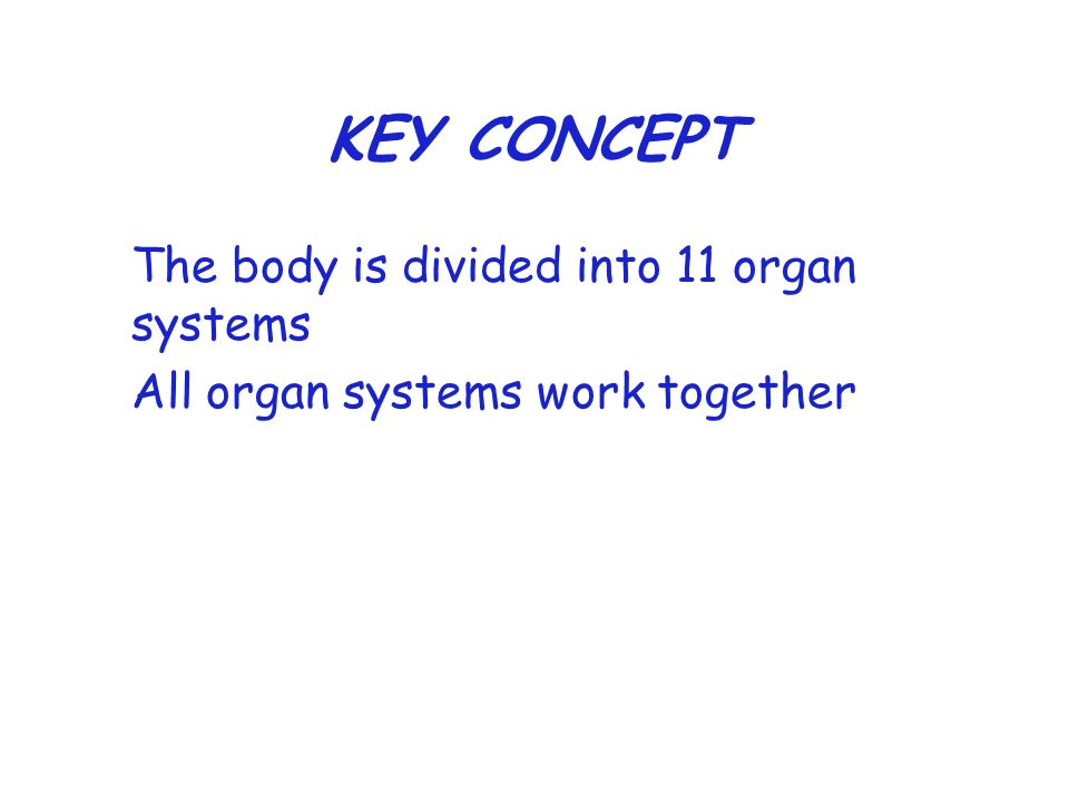 KEY CONCEPT The body is divided into 11 organ systems All organ systems work together