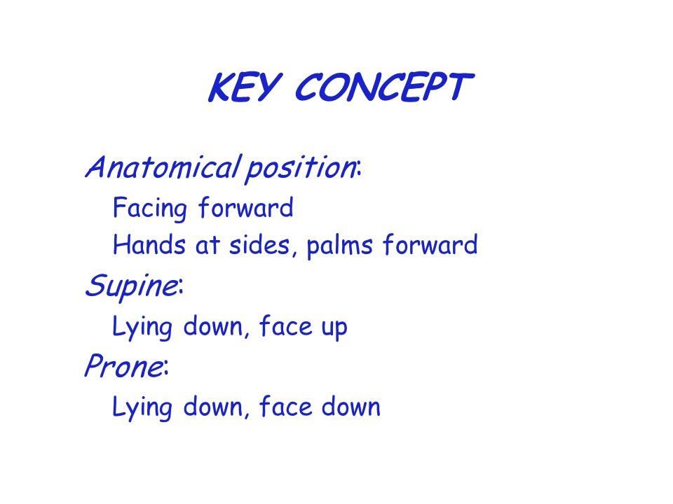 KEY CONCEPT Anatomical position: Facing forward Hands at sides, palms forward Supine: Lying down, face up Prone: Lying down, face down