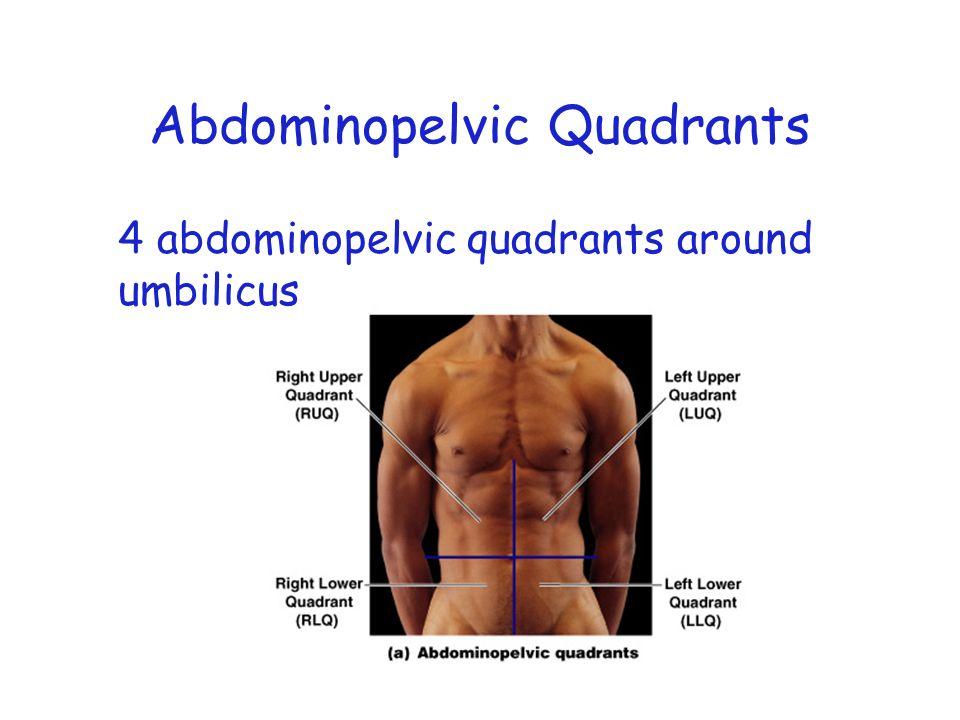 Figure 1–7a Abdominopelvic Quadrants 4 abdominopelvic quadrants around umbilicus