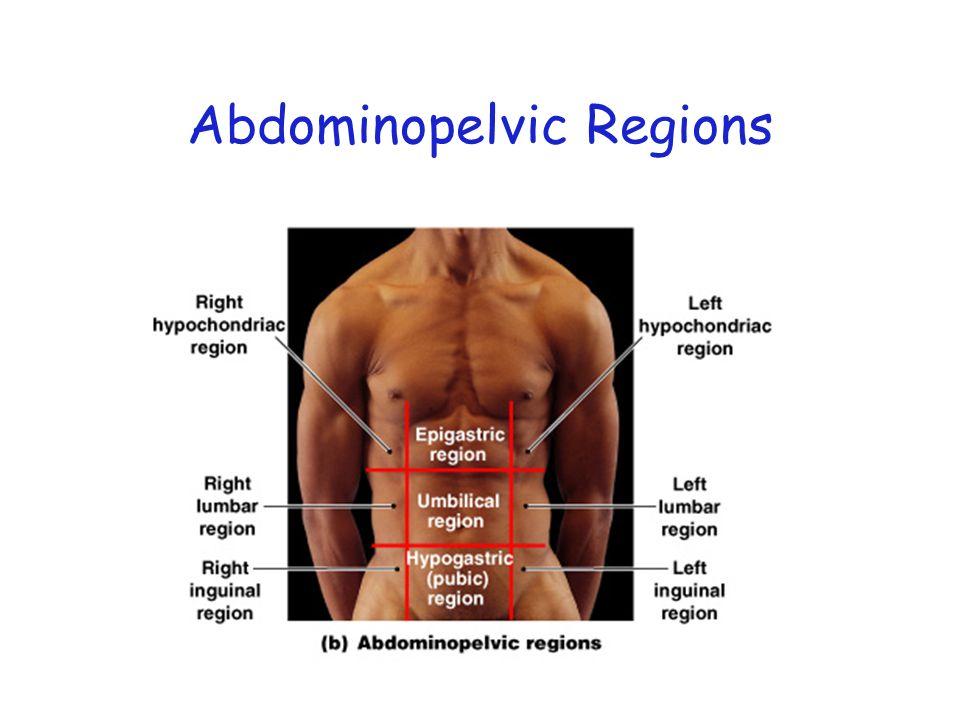 Figure 1–7b Abdominopelvic Regions