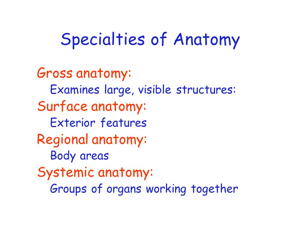 Specialties of Anatomy Gross anatomy: Examines large, visible structures: Surface anatomy: Exterior features Regional anatomy: Body areas Systemic ana