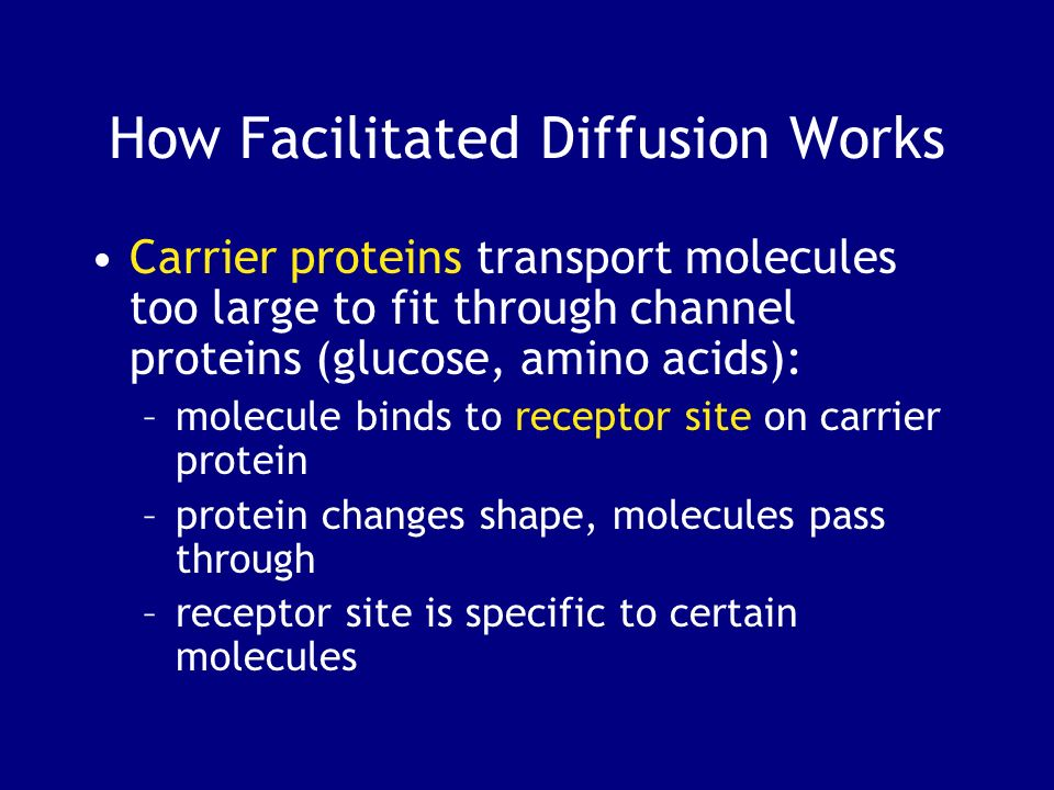 How Facilitated Diffusion Works Carrier proteins transport molecules too large to fit through channel proteins (glucose, amino acids): –molecule binds