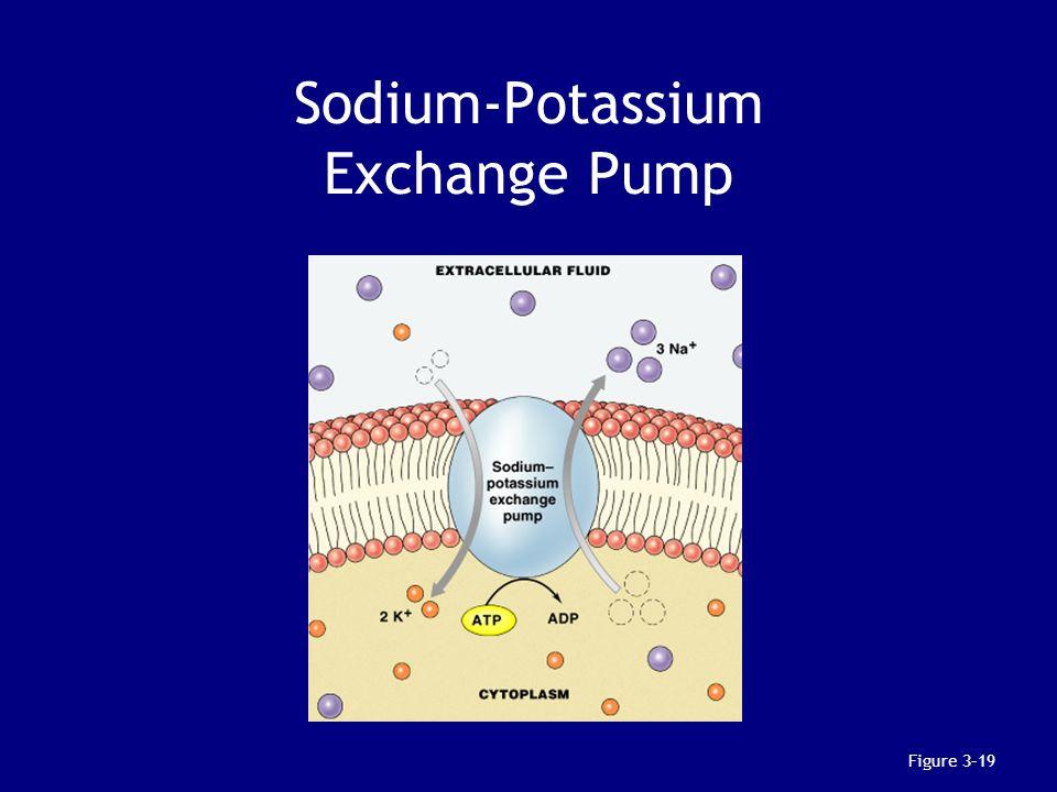 Sodium-Potassium Exchange Pump Figure 3–19