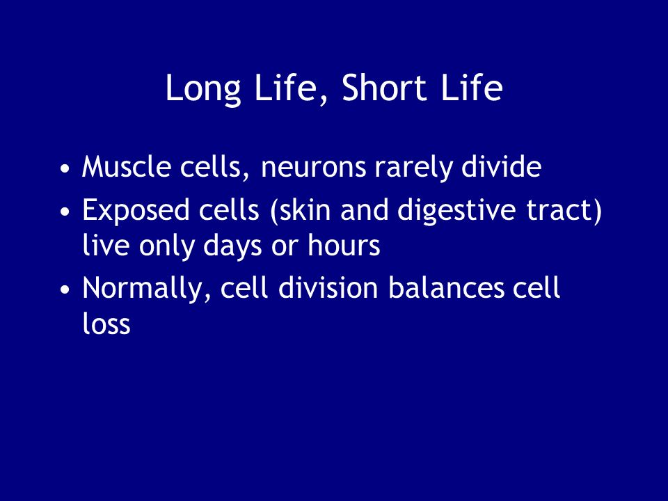 Long Life, Short Life Muscle cells, neurons rarely divide Exposed cells (skin and digestive tract) live only days or hours Normally, cell division bal