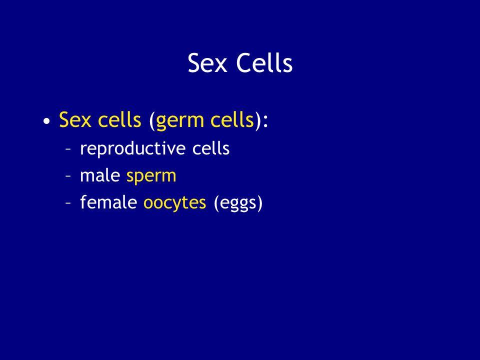 Sex Cells Sex cells (germ cells): –reproductive cells –male sperm –female oocytes (eggs)