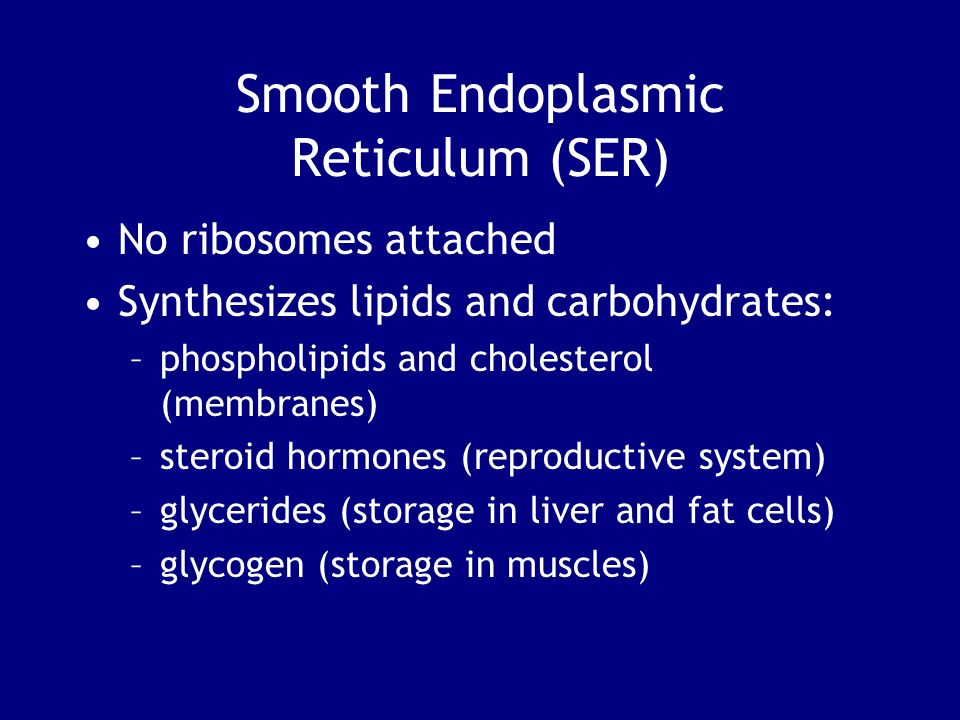 Smooth Endoplasmic Reticulum (SER) No ribosomes attached Synthesizes lipids and carbohydrates: –phospholipids and cholesterol (membranes) –steroid hor