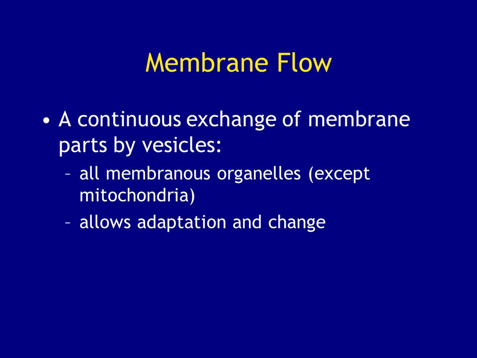 Membrane Flow A continuous exchange of membrane parts by vesicles: –all membranous organelles (except mitochondria) –allows adaptation and change