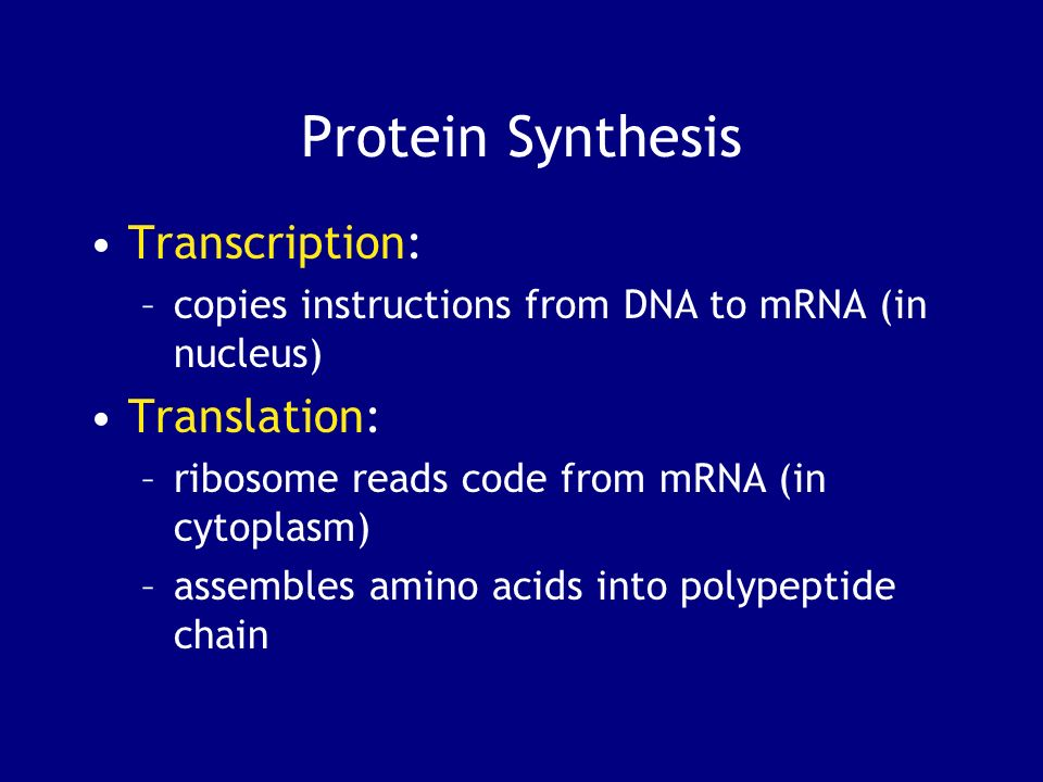 Protein Synthesis Transcription: –copies instructions from DNA to mRNA (in nucleus) Translation: –ribosome reads code from mRNA (in cytoplasm) –assemb