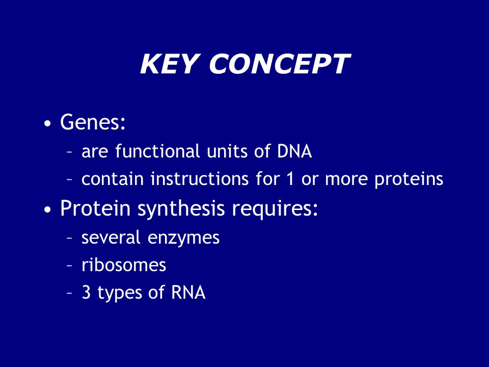 KEY CONCEPT Genes: –are functional units of DNA –contain instructions for 1 or more proteins Protein synthesis requires: –several enzymes –ribosomes –