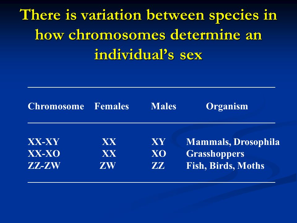 There is variation between species in how chromosomes determine an individuals sex __________________________________________________ Chromosome Females MalesOrganism __________________________________________________ XX-XY XX XY Mammals, Drosophila XX-XO XX XO Grasshoppers ZZ-ZW ZW ZZ Fish, Birds, Moths __________________________________________________