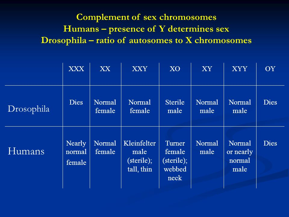 DiesNormal or nearly normal male Normal male Turner female (sterile); webbed neck Kleinfelter male (sterile); tall, thin Normal female Nearly normal female Humans DiesNormal male Sterile male Normal female Dies Drosophila OYXYYXYXOXXYXXXXX Complement of sex chromosomes Humans – presence of Y determines sex Drosophila – ratio of autosomes to X chromosomes