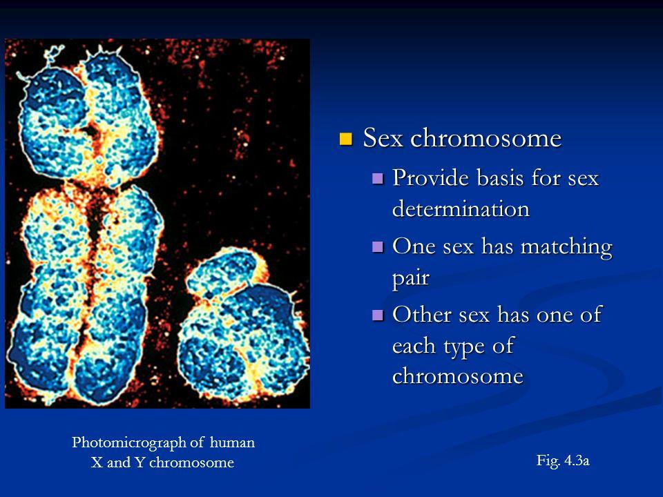 Example of sex-linked recessive trait in human pedigree – hemophilia