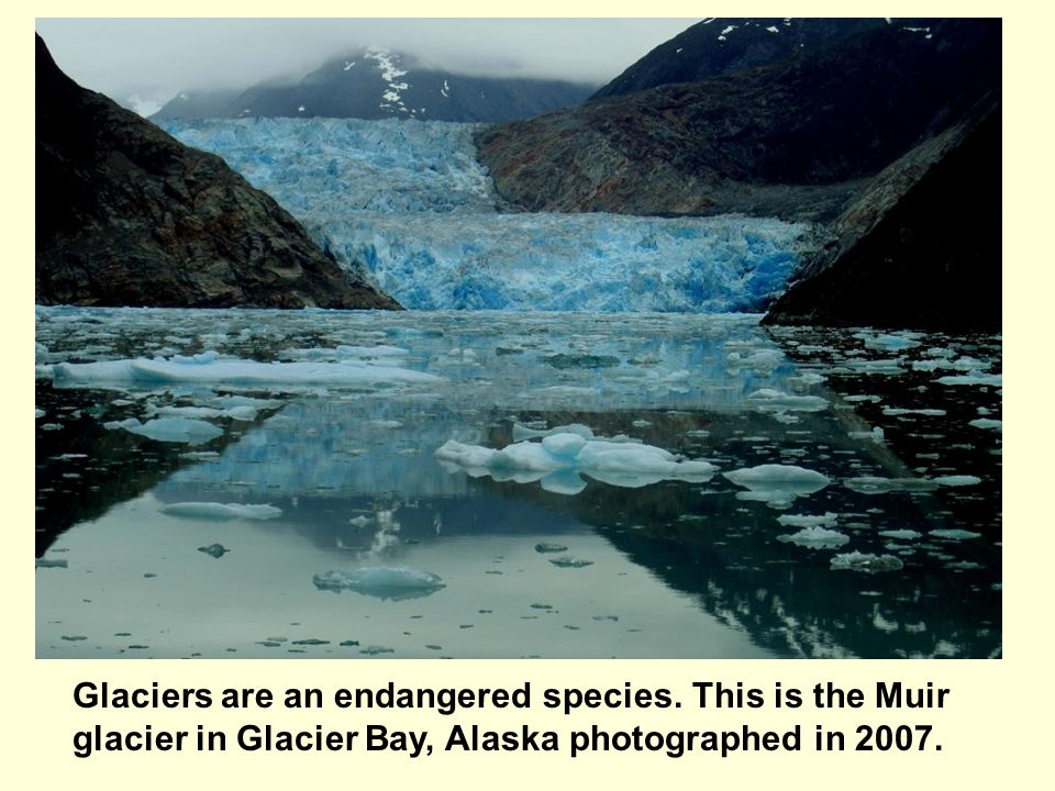 Glaciers are an endangered species. This is the Muir glacier in Glacier Bay, Alaska photographed in 2007.