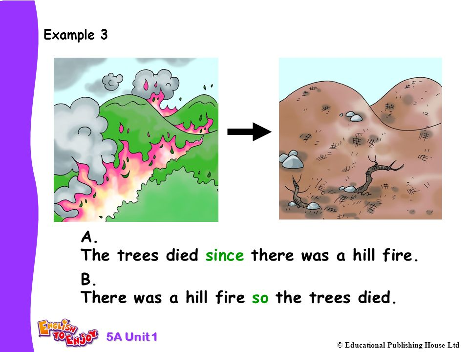 5A Unit 1 © Educational Publishing House Ltd Example 3 The trees died since there was a hill fire.