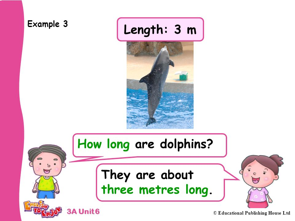 3A Unit 6 © Educational Publishing House Ltd Example 3 How long are dolphins.