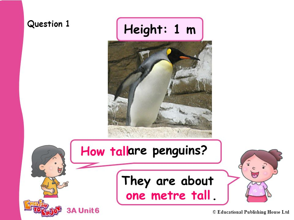 3A Unit 6 © Educational Publishing House Ltd Question 1 are penguins.