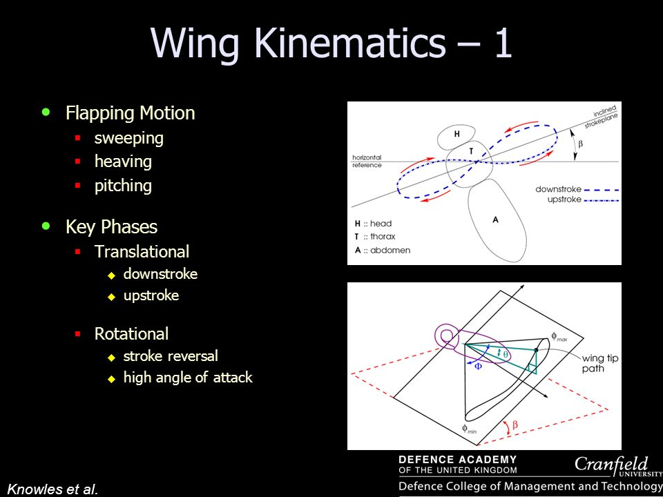 Knowles et al. Wing Kinematics – 1 Flapping Motion sweeping heaving pitching Key Phases Translational downstroke upstroke Rotational stroke reversal h