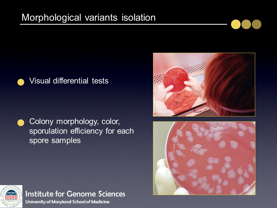 Morphological variants isolation Visual differential tests Colony morphology, color, sporulation efficiency for each spore samples Institute for Genom