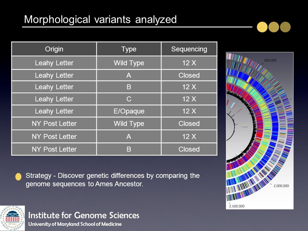 Morphological variants analyzed OriginTypeSequencing Leahy LetterWild Type12 X Leahy LetterAClosed Leahy LetterB12 X Leahy LetterC12 X Leahy LetterE/O