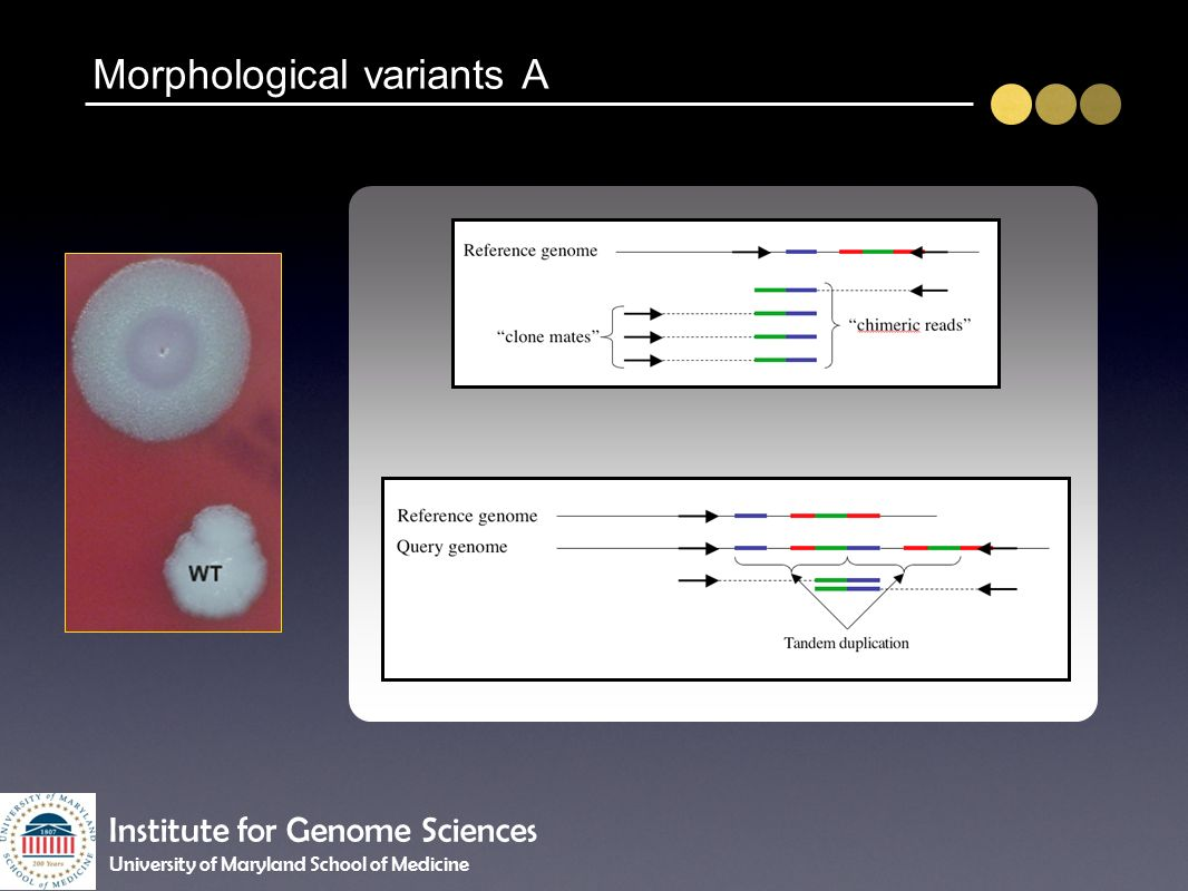 Morphological variants A Institute for Genome Sciences University of Maryland School of Medicine
