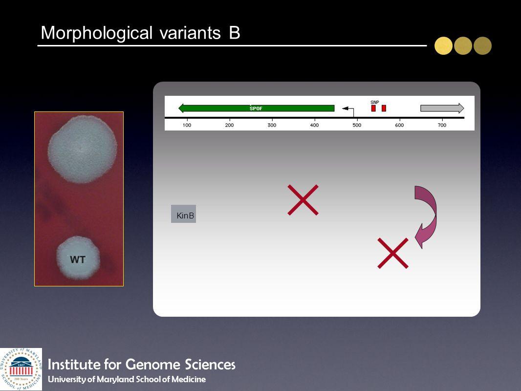 Morphological variants B KinB spoOF Institute for Genome Sciences University of Maryland School of Medicine