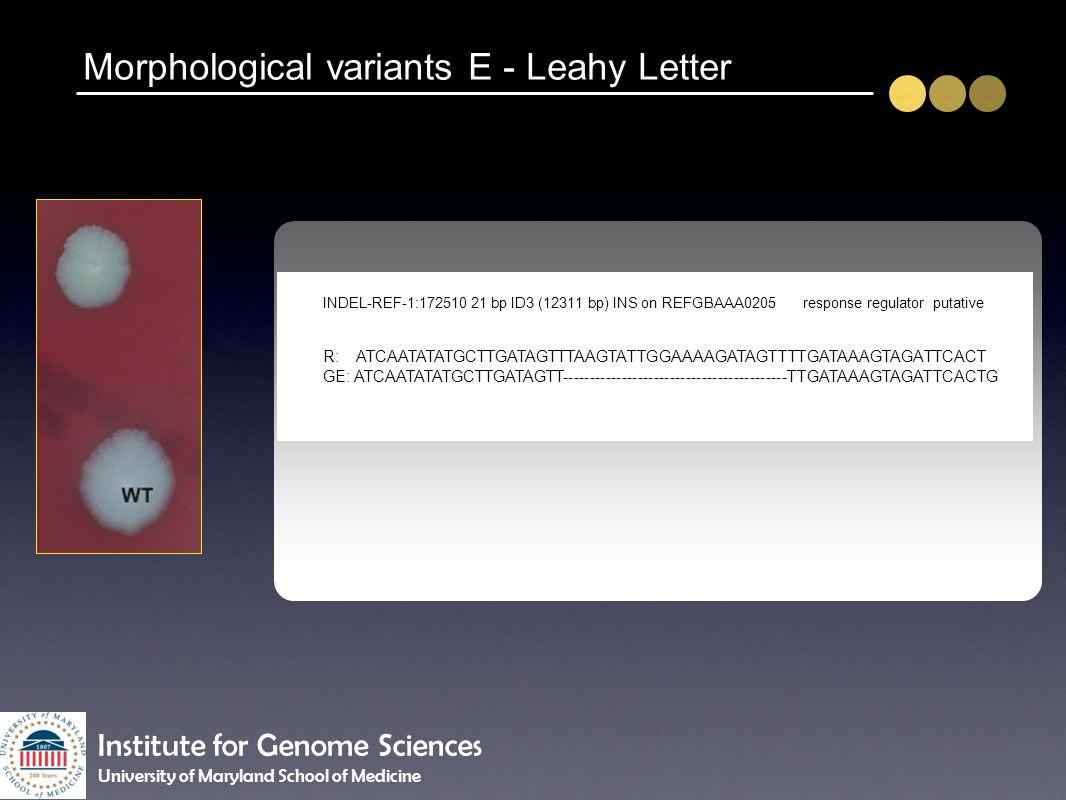 Morphological variants E - Leahy Letter INDEL-REF-1:172510 21 bp ID3 (12311 bp) INS on REFGBAAA0205response regulator putative R: ATCAATATATGCTTGATAGT