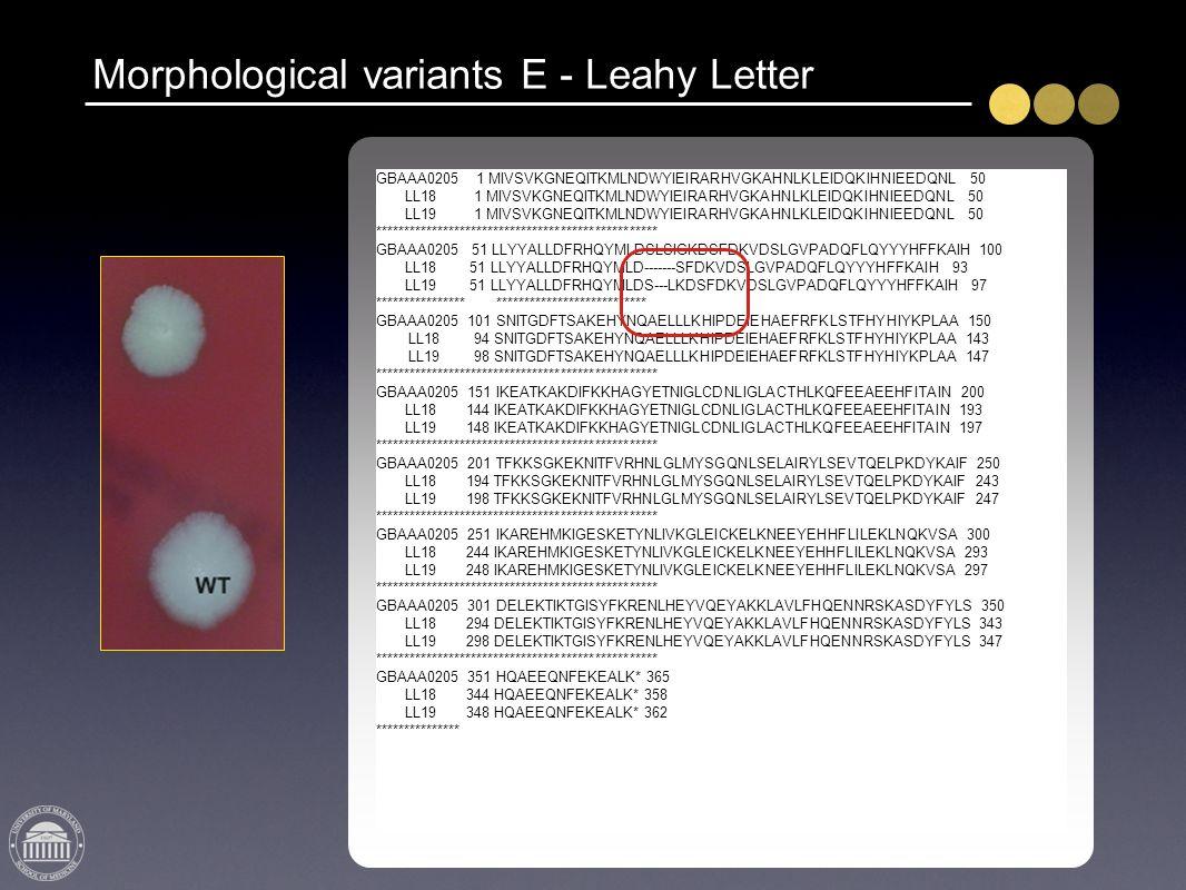 Morphological variants E - Leahy Letter GBAAA0205 1 MIVSVKGNEQITKMLNDWYIEIRARHVGKAHNLKLEIDQKIHNIEEDQNL 50 LL18 1 MIVSVKGNEQITKMLNDWYIEIRARHVGKAHNLKLEI