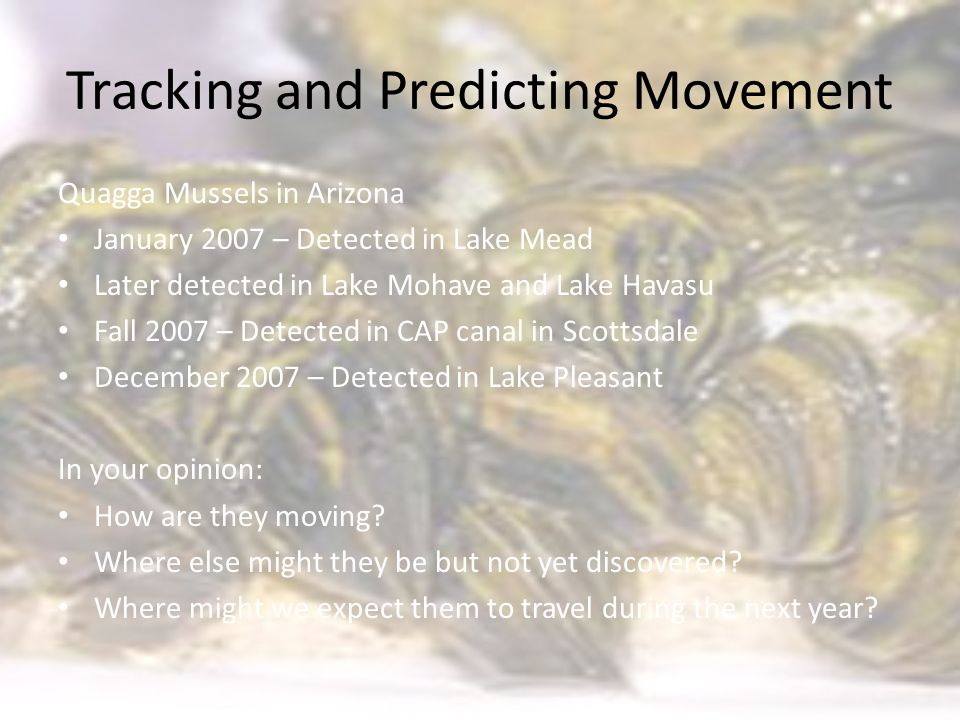 Tracking and Predicting Movement Quagga Mussels in Arizona January 2007 – Detected in Lake Mead Later detected in Lake Mohave and Lake Havasu Fall 2007 – Detected in CAP canal in Scottsdale December 2007 – Detected in Lake Pleasant In your opinion: How are they moving.