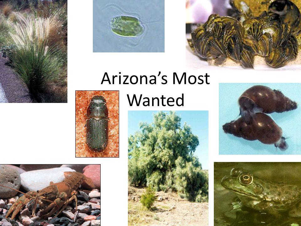 Arizonas Most Wanted