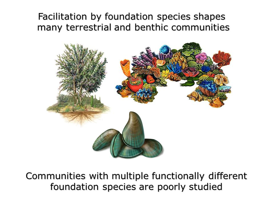 Facilitation by foundation species shapes many terrestrial and benthic communities Communities with multiple functionally different foundation species are poorly studied