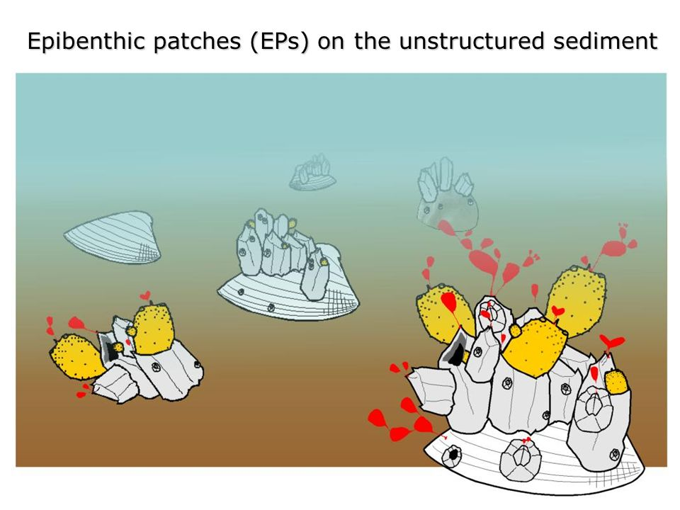 Epibenthic patches (EPs) on the unstructured sediment