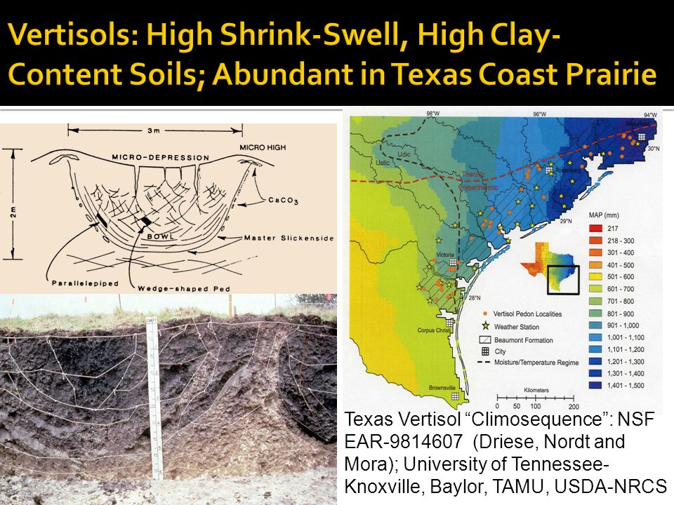 Texas Vertisol Climosequence: NSF EAR-9814607 (Driese, Nordt and Mora); University of Tennessee- Knoxville, Baylor, TAMU, USDA-NRCS