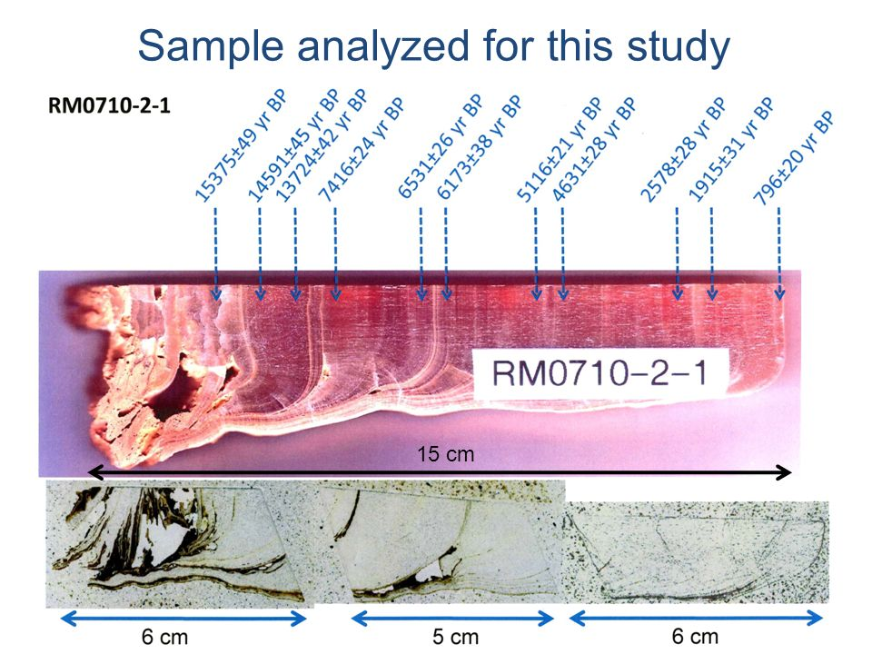 Sample analyzed for this study 15 cm