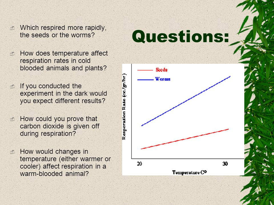 Questions: Which respired more rapidly, the seeds or the worms? How does temperature affect respiration rates in cold blooded animals and plants? If y
