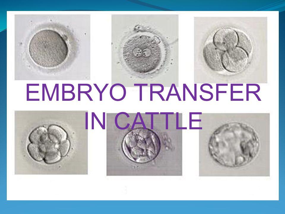 EMBRYO TRANSFER IN CATTLE