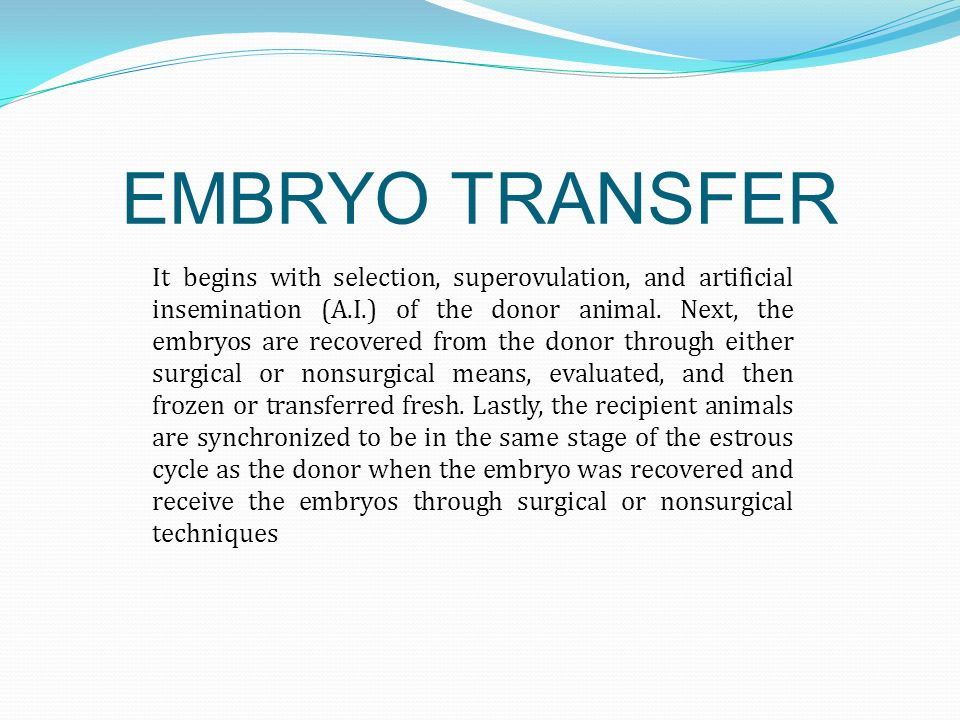 SURGICAL EMBRYO TRANSFER PROCEDURES Cows must put under general anaesthesia.