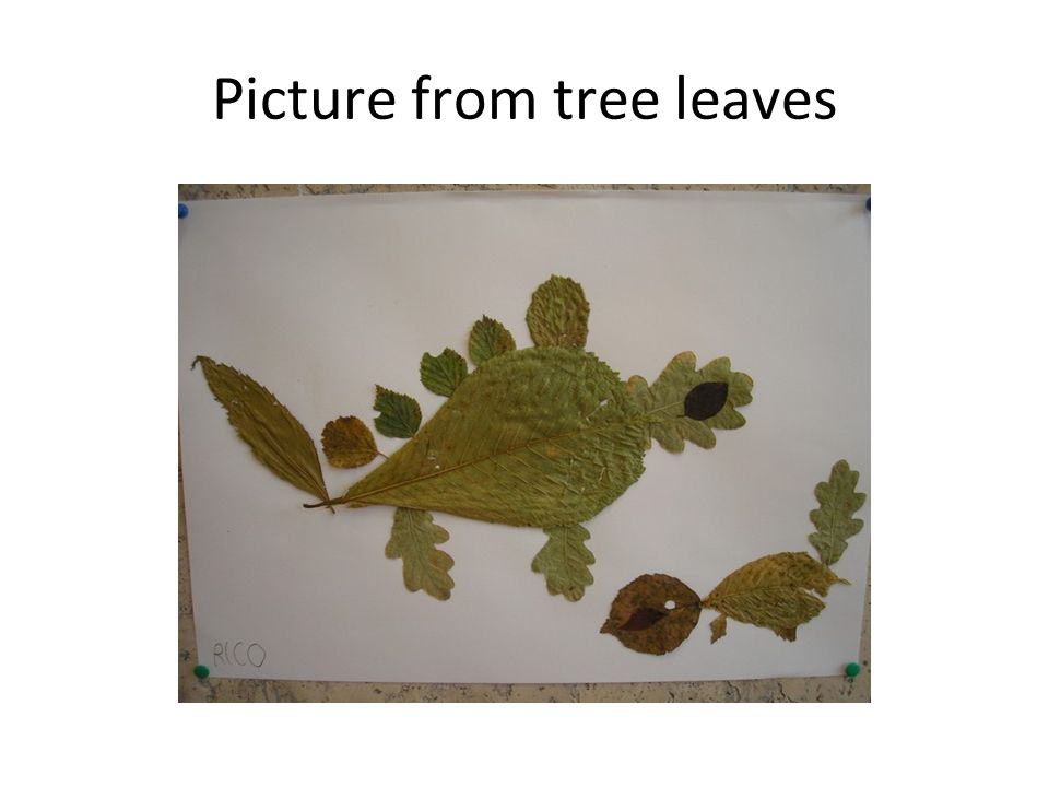 Picture from tree leaves