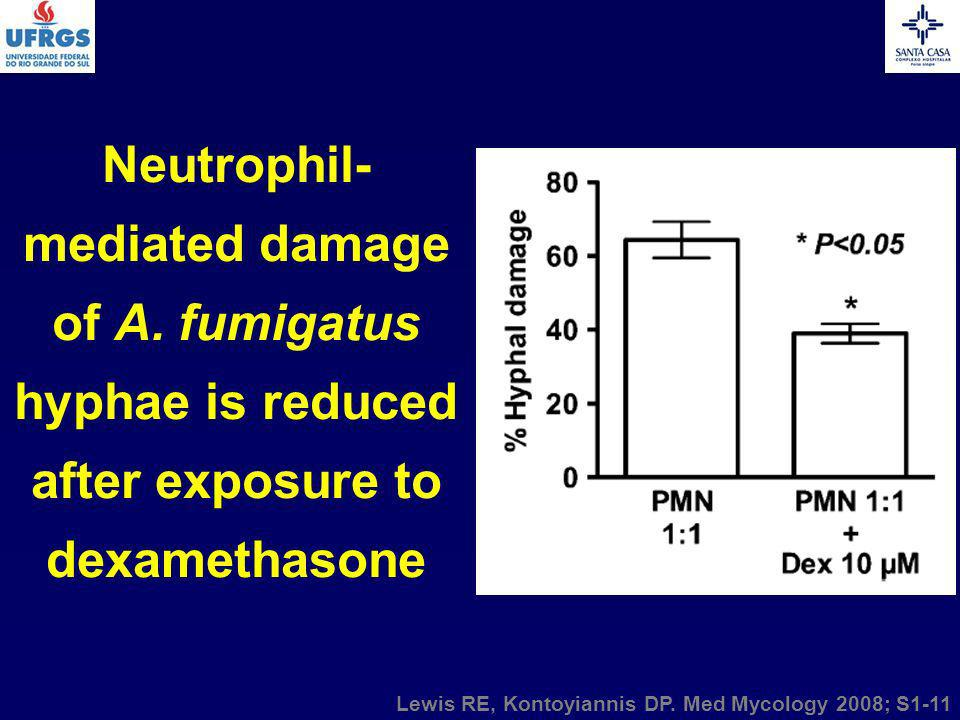 Neutrophil- mediated damage of A. fumigatus hyphae is reduced after exposure to dexamethasone Lewis RE, Kontoyiannis DP. Med Mycology 2008; S1-11