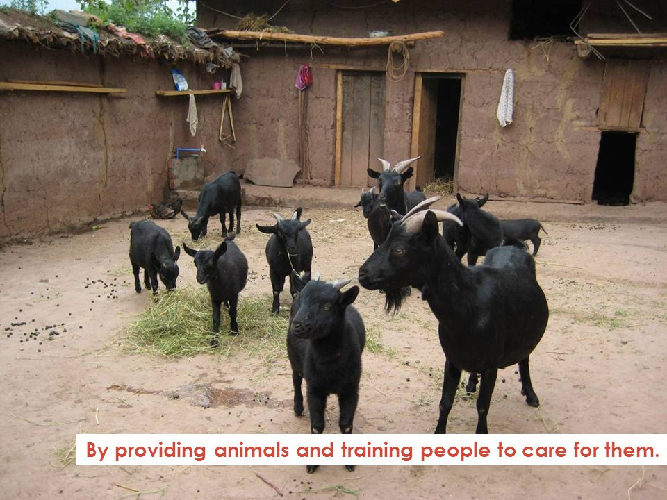 By providing animals and training people to care for them.