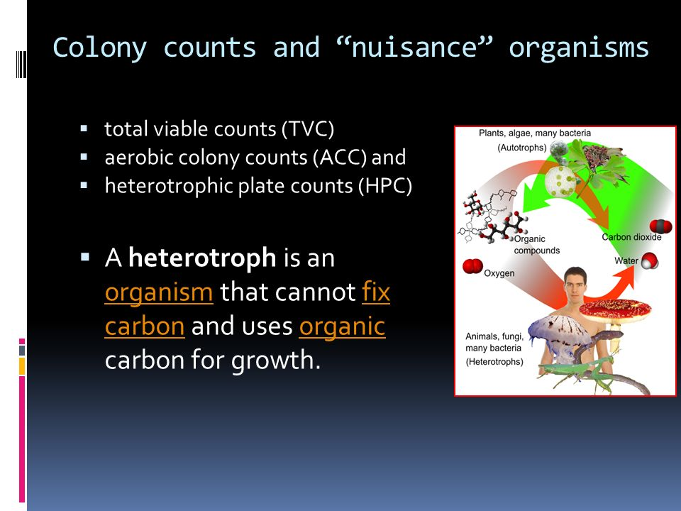 Colony counts and nuisance organisms total viable counts (TVC) aerobic colony counts (ACC) and heterotrophic plate counts (HPC) A heterotroph is an or