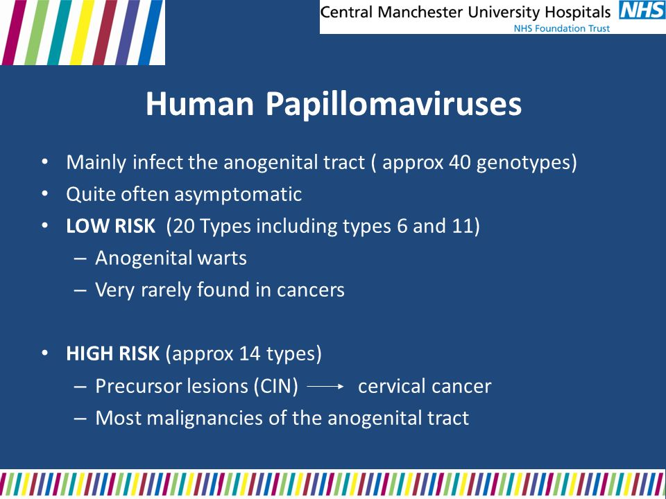Human Papillomaviruses Mainly infect the anogenital tract ( approx 40 genotypes) Quite often asymptomatic LOW RISK (20 Types including types 6 and 11)