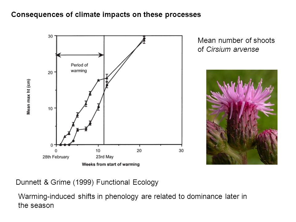 Consequences of climate impacts on these processes Dunnett & Grime (1999) Functional Ecology warmed control Mean number of shoots of Cirsium arvense W