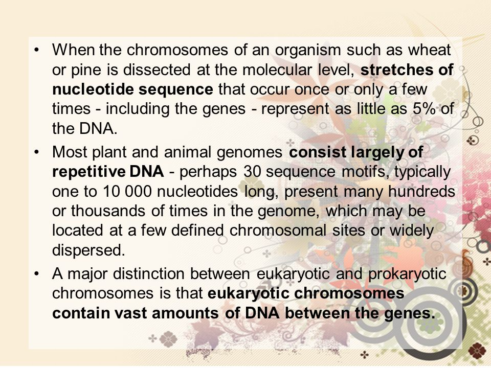 When the chromosomes of an organism such as wheat or pine is dissected at the molecular level, stretches of nucleotide sequence that occur once or onl