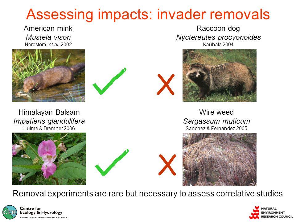 Assessing impacts: invader removals X X American mink Mustela vison Nordstom et al.
