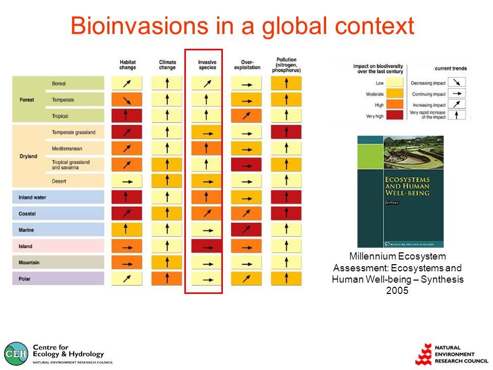 Bioinvasions in a global context Millennium Ecosystem Assessment: Ecosystems and Human Well-being – Synthesis 2005