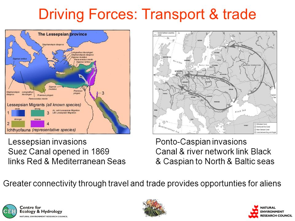 Driving Forces: Transport & trade Greater connectivity through travel and trade provides opportunties for aliens Ponto-Caspian invasions Canal & river network link Black & Caspian to North & Baltic seas Lessepsian invasions Suez Canal opened in 1869 links Red & Mediterranean Seas