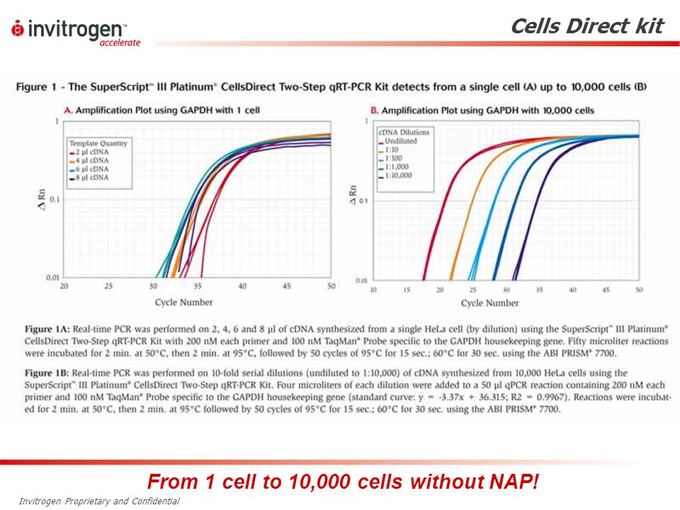 Invitrogen Proprietary and Confidential From 1 cell to 10,000 cells without NAP! Cells Direct kit